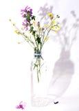 herbs various Στοκ Εικόνες