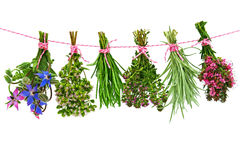 Herbs. Various fresh herbs hanging in bunches on a washing line against a white background royalty free stock images