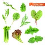 Herbs vector illustration Stock Photo