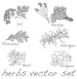 Herbs vector set Stock Image