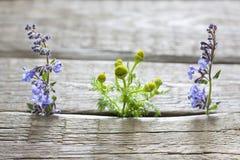 Herbs on vintage planks aromatherapy background Stock Photos