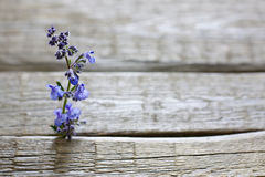 Herbs on vintage planks aromatherapy background Stock Photography