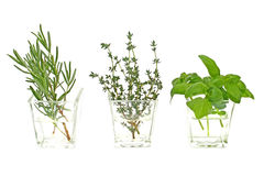 Herbs in water Royalty Free Stock Photo