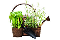Herbs with watering can and trowel Stock Images
