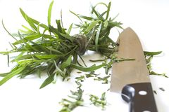 Herbs on white chopping board Royalty Free Stock Photos
