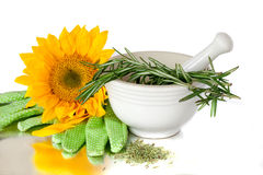 Herbs In A White Mortar and Pestle Ceramic Pot Stock Photography