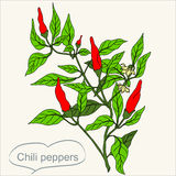 0416_60  Herbs and Wild Flower. Chili peppers  bush With Leaves vector hand drawn illustration. Contour outline style. It can be used for package in organic Stock Image