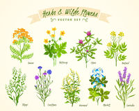 Herbs And Wild Flowers Background Set. Flat white background with set of various blooming herbs and wild flowers with their names isolated vector illustration Vector Illustration