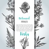 Herbs and wild flowers background Vintage collection of Plants Vector illustrations in sketch style. Background Hand drawn herbs and wild flowers Vintage royalty free illustration