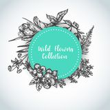 Herbs and wild flowers background Vintage collection of Plants Vector illustrations in sketch style. Background Hand drawn herbs and wild flowers Vintage vector illustration