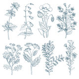 Herbs wild flowers botanical medicinal organic healing plants vector set in hand drawn style. Herb medicine plant and illustration of botanical plant for Stock Photos