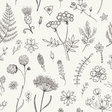 Herbs and Wild Flowers. Botany pattern. Vector seamless pattern with black and white herbarium flowers. Botanical backdrop Royalty Free Stock Photography