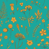Herbs and Wild Flowers. Botany pattern. Vector seamless pattern with herbarium flowers. Botanical backdrop. Template for graphic design, textile and postcards Royalty Free Stock Image