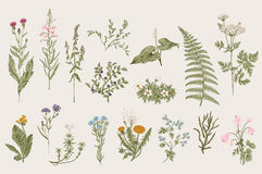 Herbs and Wild Flowers. Botany. Set. Vintage flowers. Colorful illustration in the style of engravings Royalty Free Illustration