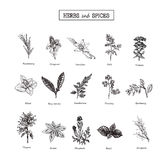 Herbs and Wild Flowers. Botany. 15 Set. Vintage flowers. Vector illustration Stock Photo
