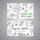 Herbs and Wild Flowers. Hand drawn herbal design with spices, medicinal, cosmetic plants. Illustration for advertising. Brochures, flyers, modern promotion Vector Illustration