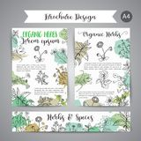 Herbs and Wild Flowers. Hand drawn herbal design with spices, medicinal, cosmetic plants. Illustration for beauty store. Advertising, brochures, flyers Vector Illustration