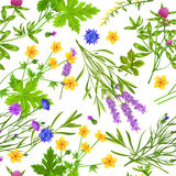 Herbs And Wild Flowers Seamless Pattern. Flat seamless pattern with blooming herbs and wild flowers such as buttercup cornflower lavender and clover on white Royalty Free Illustration
