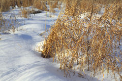 Herbs in winter field, plant, white snow, sunny. Herbs in winter field plant white snow sunny Stock Image