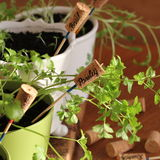 Herbs With Markers Growing In Pot Royalty Free Stock Photos