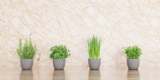 Herbs on wood desk and marble background 3D illustration stock illustration
