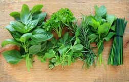 Herbs on wooden background Stock Image