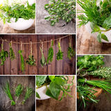 Herbs on wooden table Stock Photos