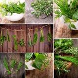 Herbs on wooden table Stock Photos