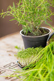Herbs on a wooden underground Stock Photo