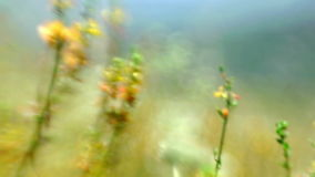 Herbs and yellow flowers summer meadow abstract stock video