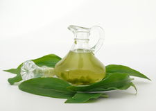 Herbsoil vert Photos stock