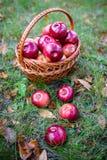 Herbstäpfel Stockfotos