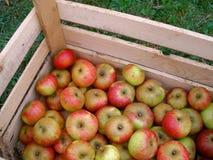 Herbst-Äpfel Stockbild