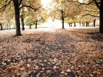 Herbst 06 Lizenzfreies Stockbild