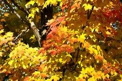 Herbst. Stockbilder