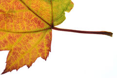 Herbst Lizenzfreie Stockbilder