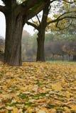 Herbst 2011 Fotografia Stock