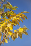 Herbst 2011 Immagini Stock
