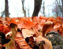 Herbst Stockfoto