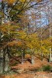 Herbst lizenzfreie stockfotos