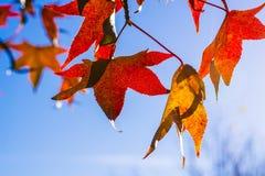 Herbst Lizenzfreie Stockfotografie