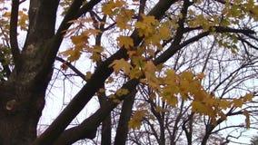 Herbst stock video