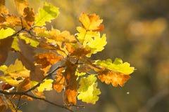 Herbst Stockfotografie