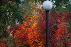 Herbst Lizenzfreies Stockfoto
