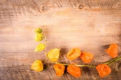 Herbst ackground Kapstachelbeere auf Holztisch Stockfoto