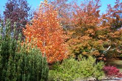 Herbst, Adelaide-Hügel Stockbild