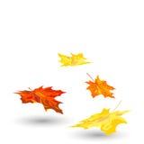 Herbst-Ahornblätter Stockfotografie