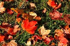 Herbst Ahornblätter auf dem Gras Lizenzfreie Stockbilder