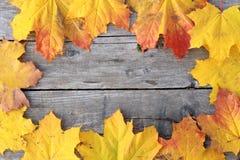Herbst-Ahornblätter auf einem hölzernen Fußboden. Stockfotos