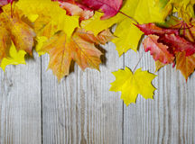 Herbst-Ahornblätter auf hölzernem Hintergrund Stockfotografie